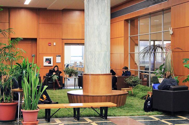 Cornell-Library-Grass2